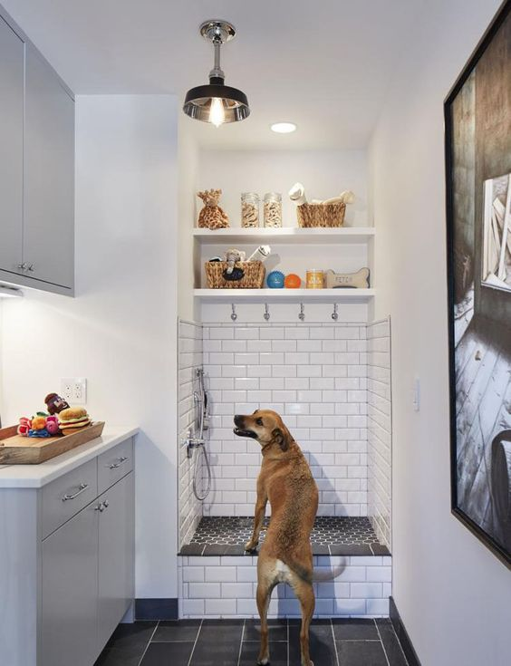 dog shower, o banho para cahorro em casa 2