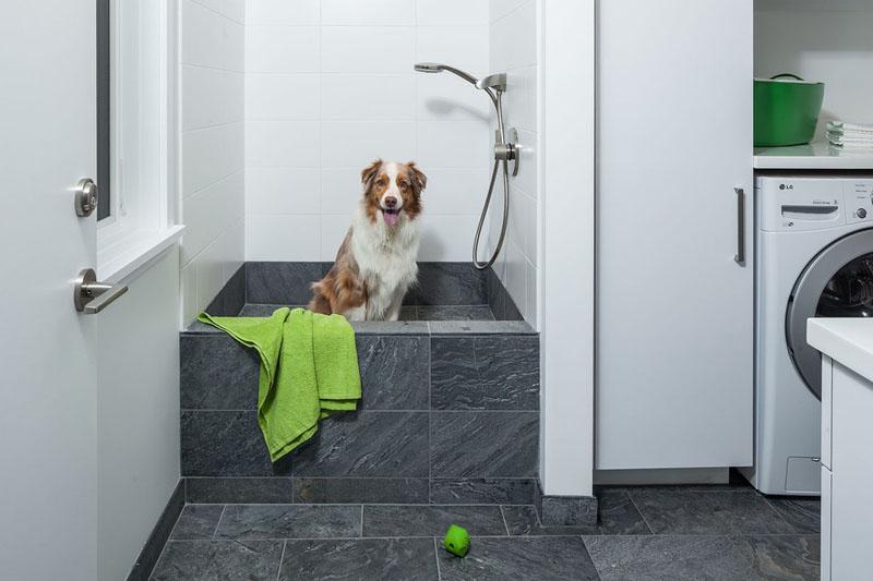dog shower, o banho para cahorro em casa 6